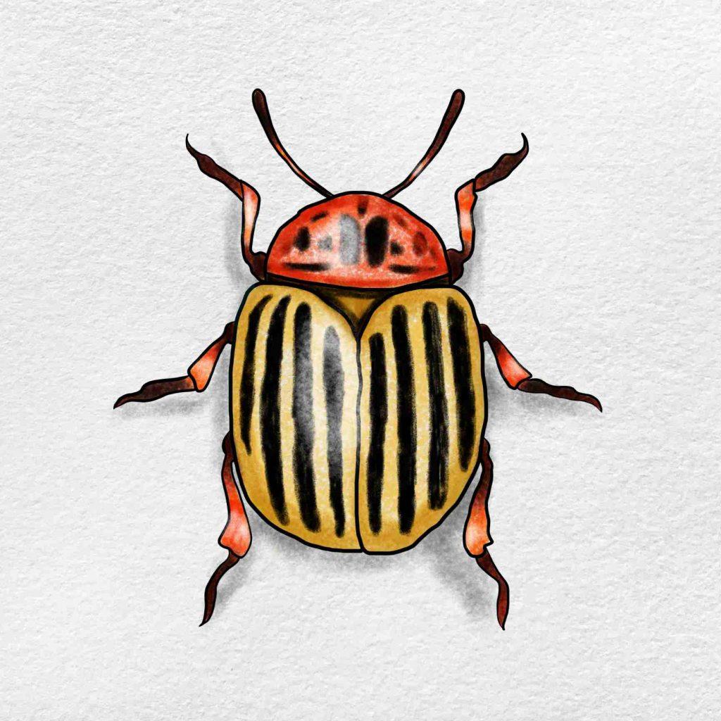 Beetle Drawing: Step 6