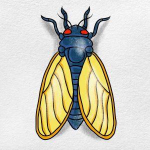 How To Draw A Cicada: Step 6