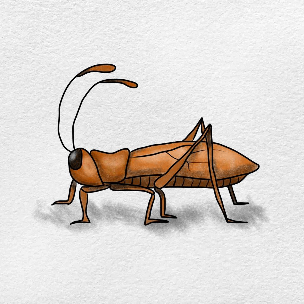 How To Draw A Cricket: Step 9