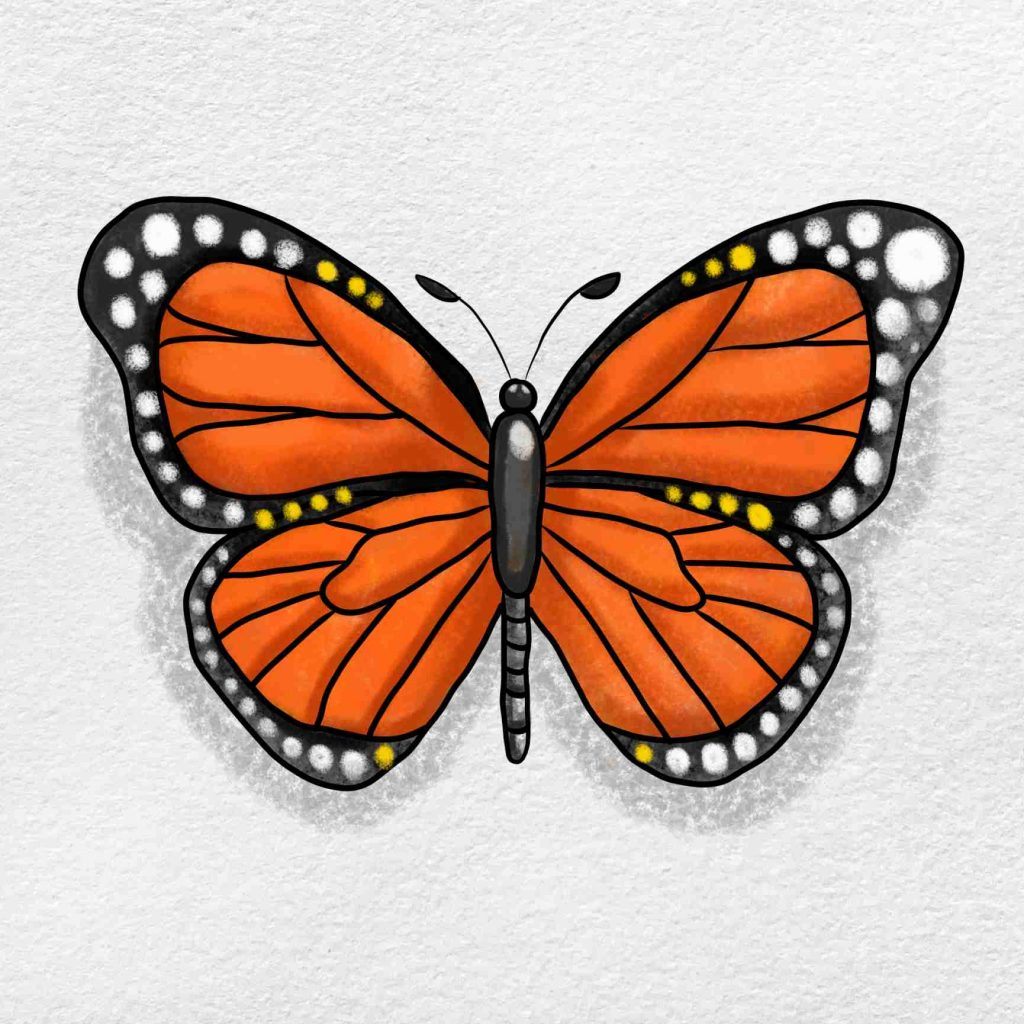 Monarch Butterfly Drawing: Step 6