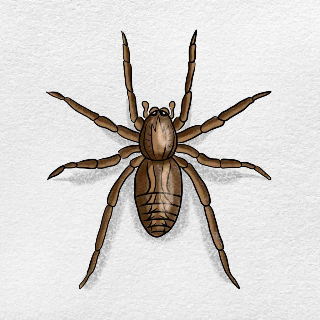 Wolf Spider Drawing: Step 6