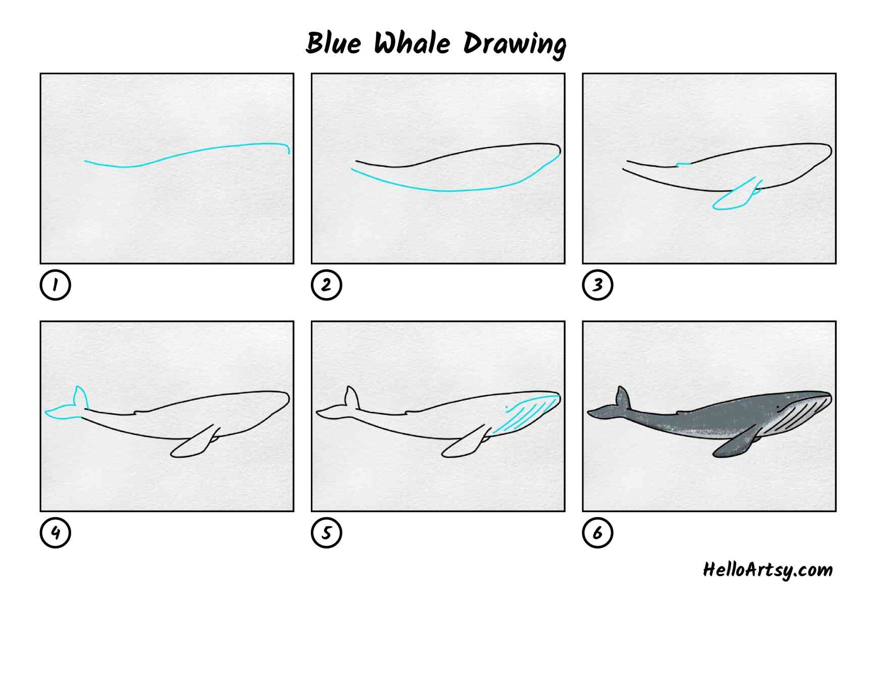 Blue Whale Drawing: All Steps
