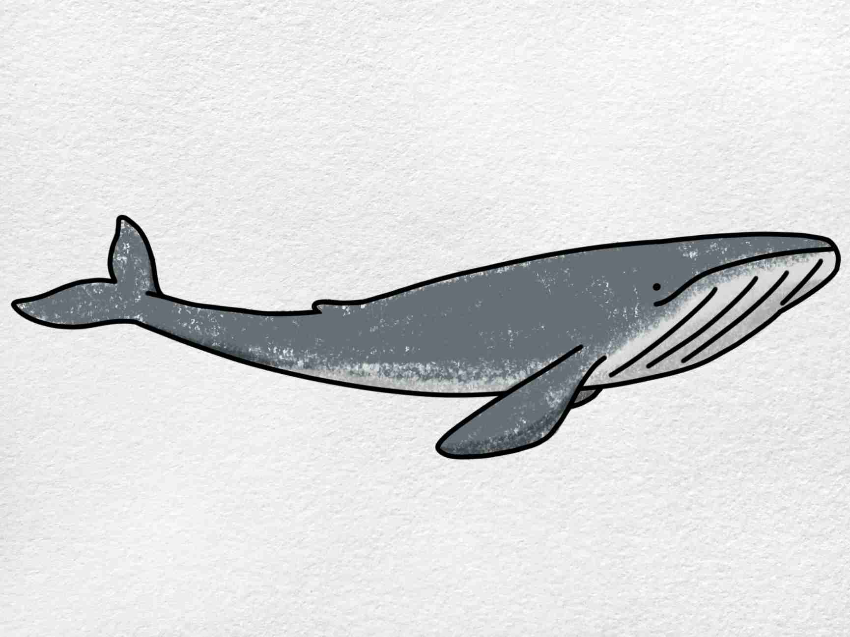 Blue Whale Drawing: Step 6