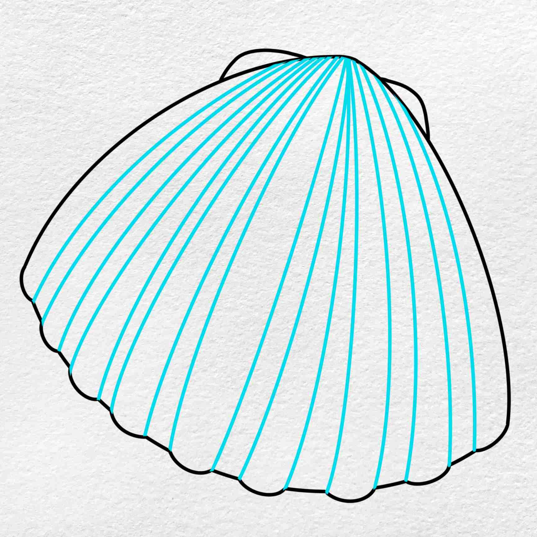 Clam Drawing: Step 5