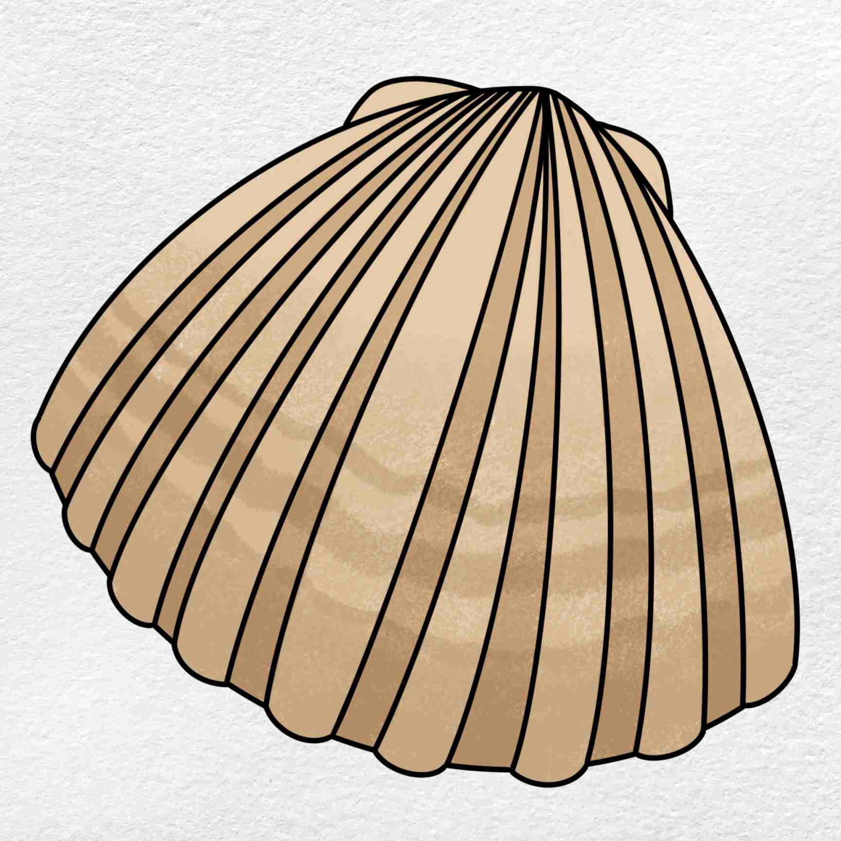 Clam Drawing: Step 6