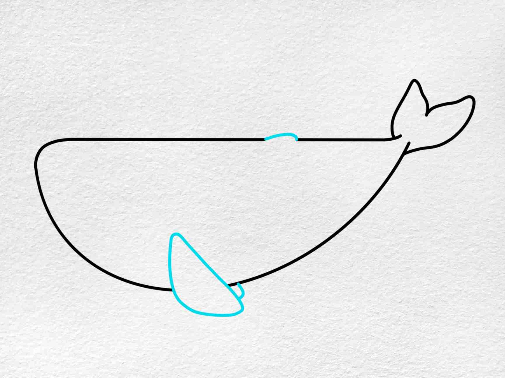 Cute Whale Drawing: Step 4