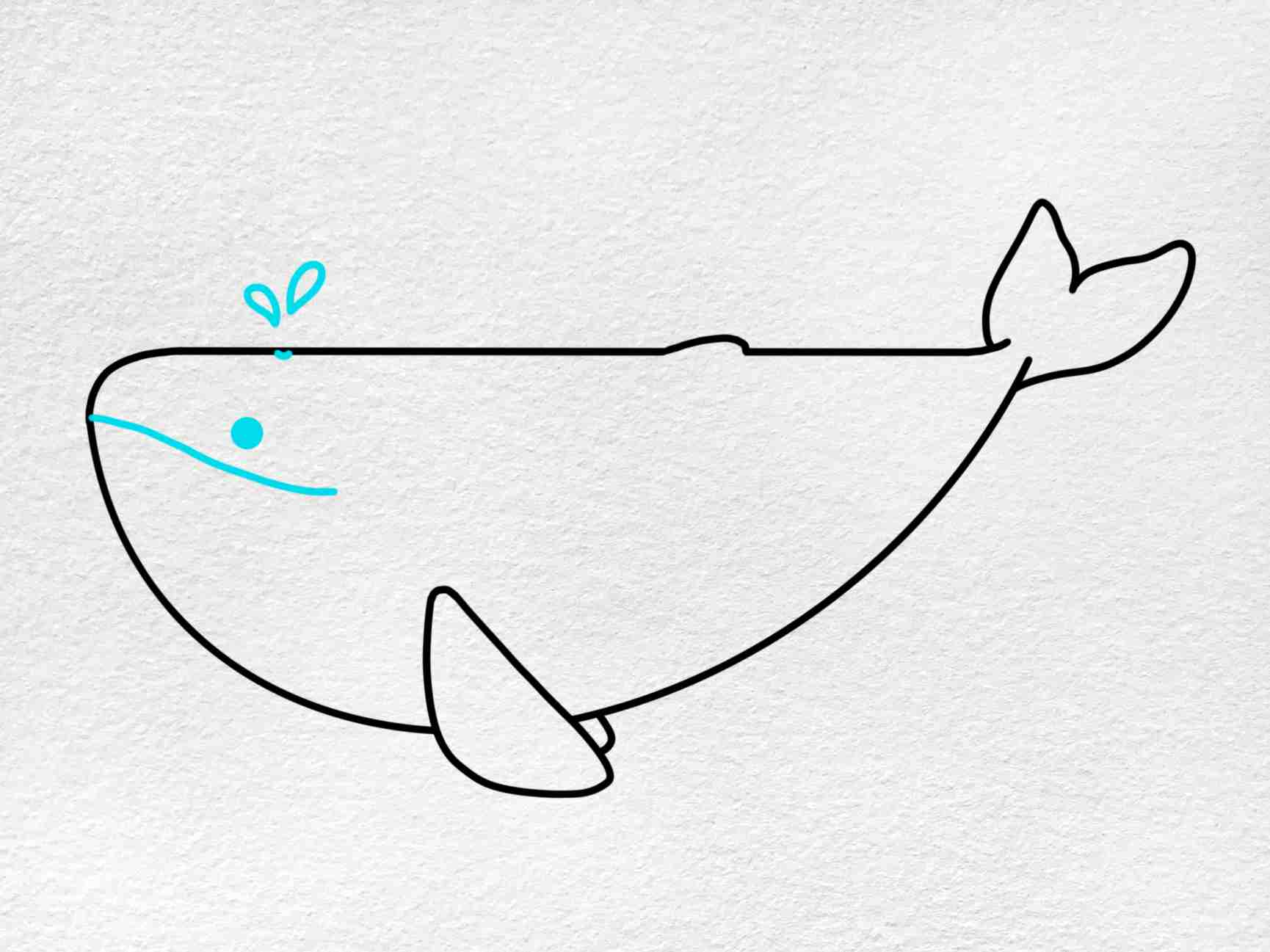 Cute Whale Drawing: Step 5