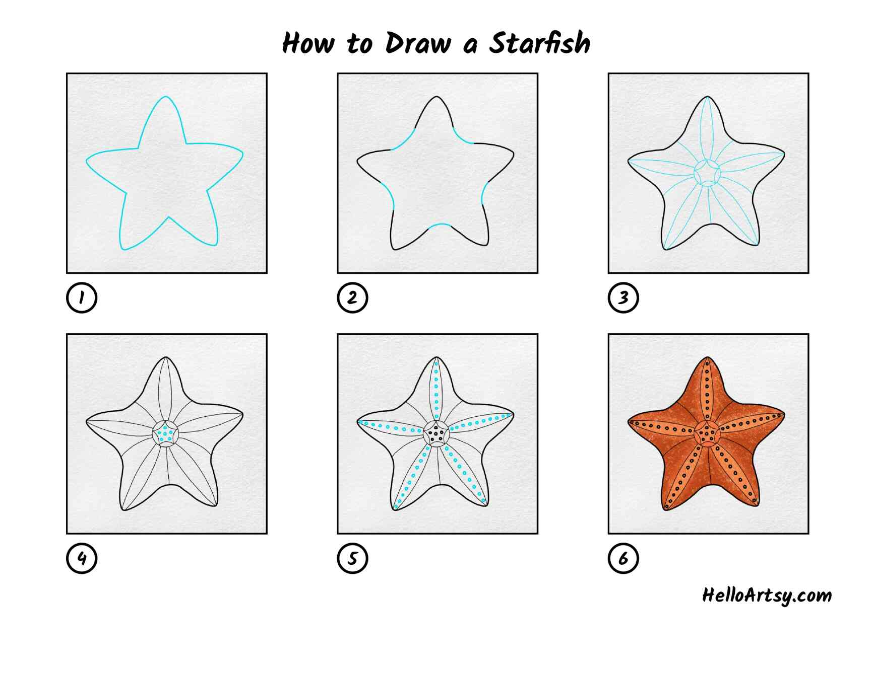 How To Draw A Starfish: All Steps