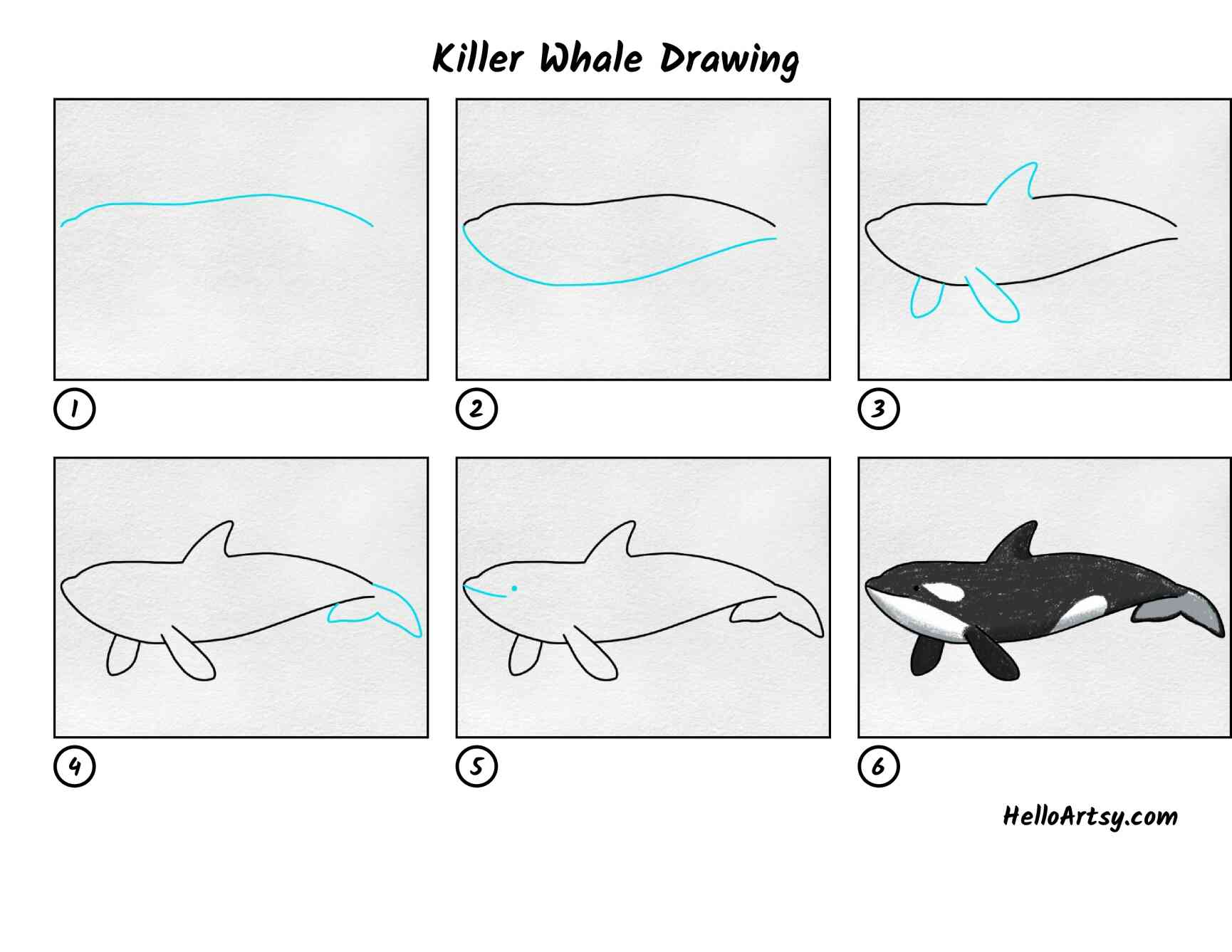 Killer Whale Drawing: All Steps
