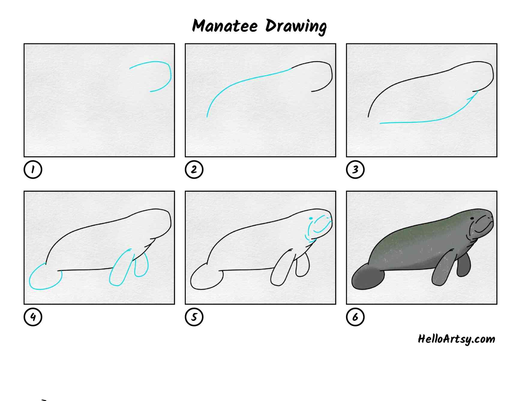 Manatee Drawing: All Steps
