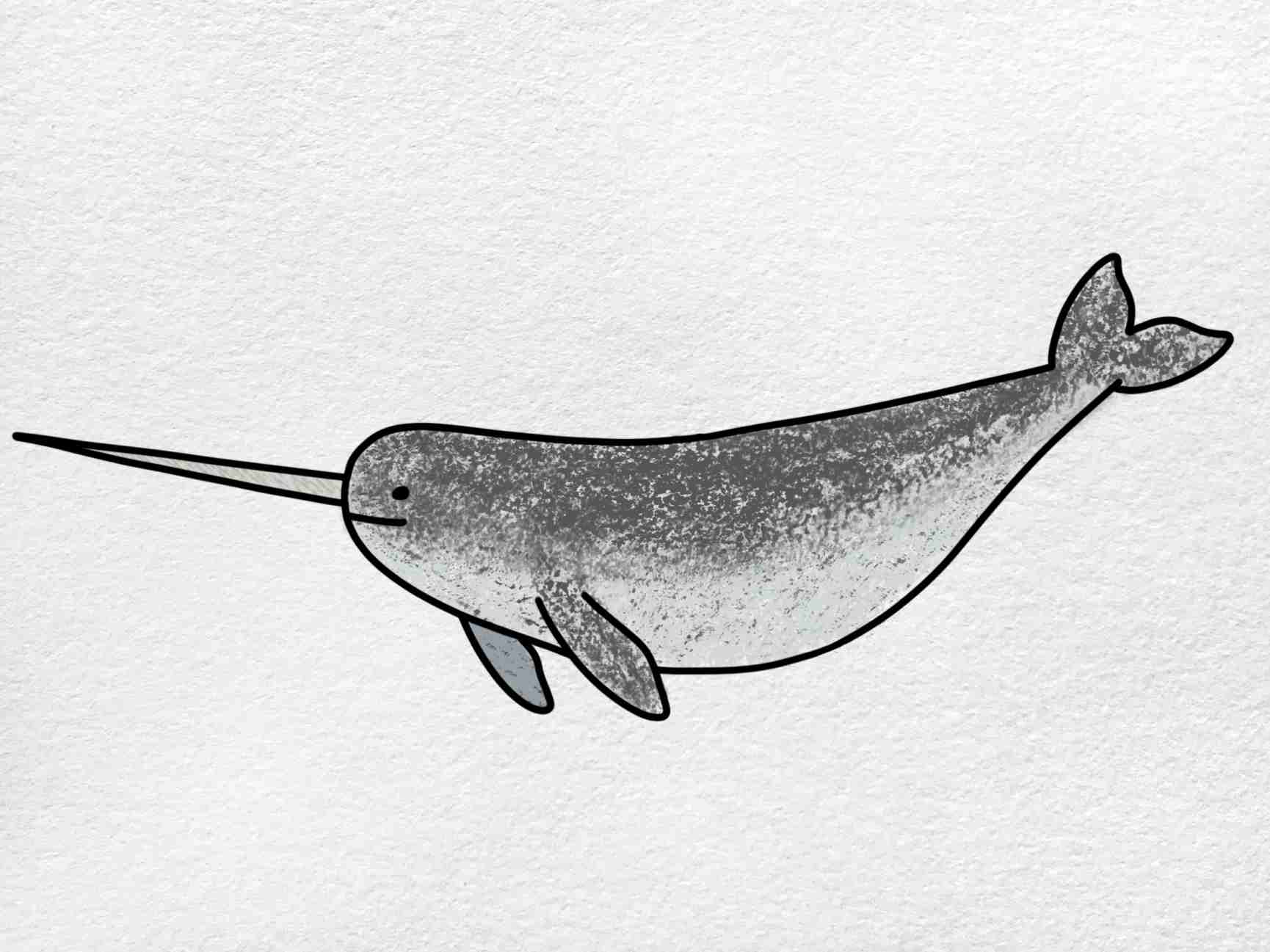 Narwhal Drawing: Step 6
