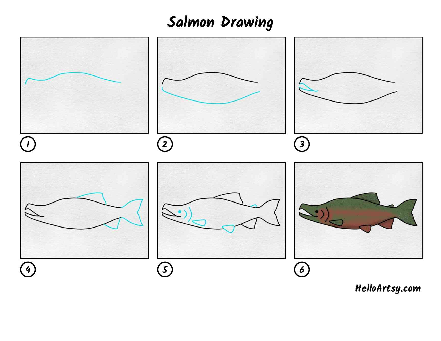 Salmon Drawing: All Steps