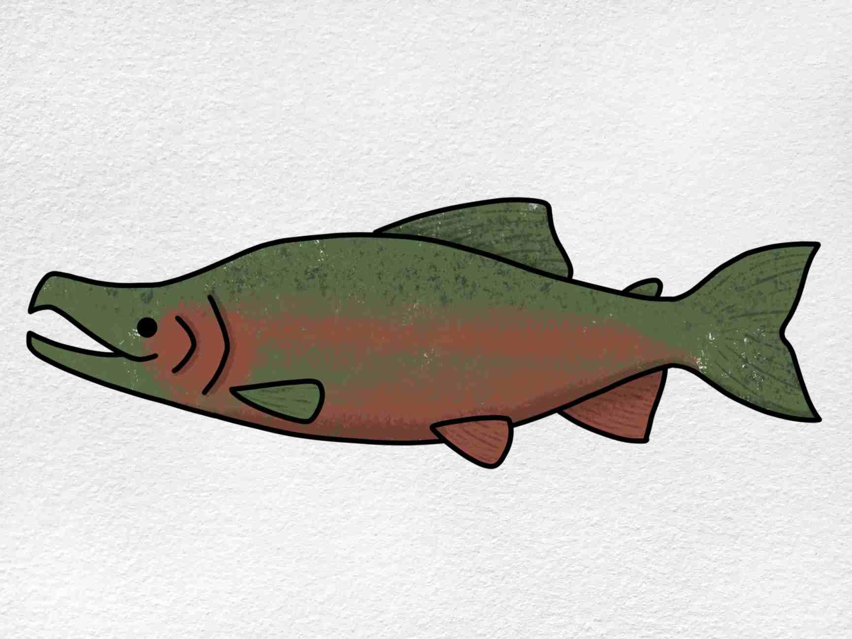 Salmon Drawing: Step 6