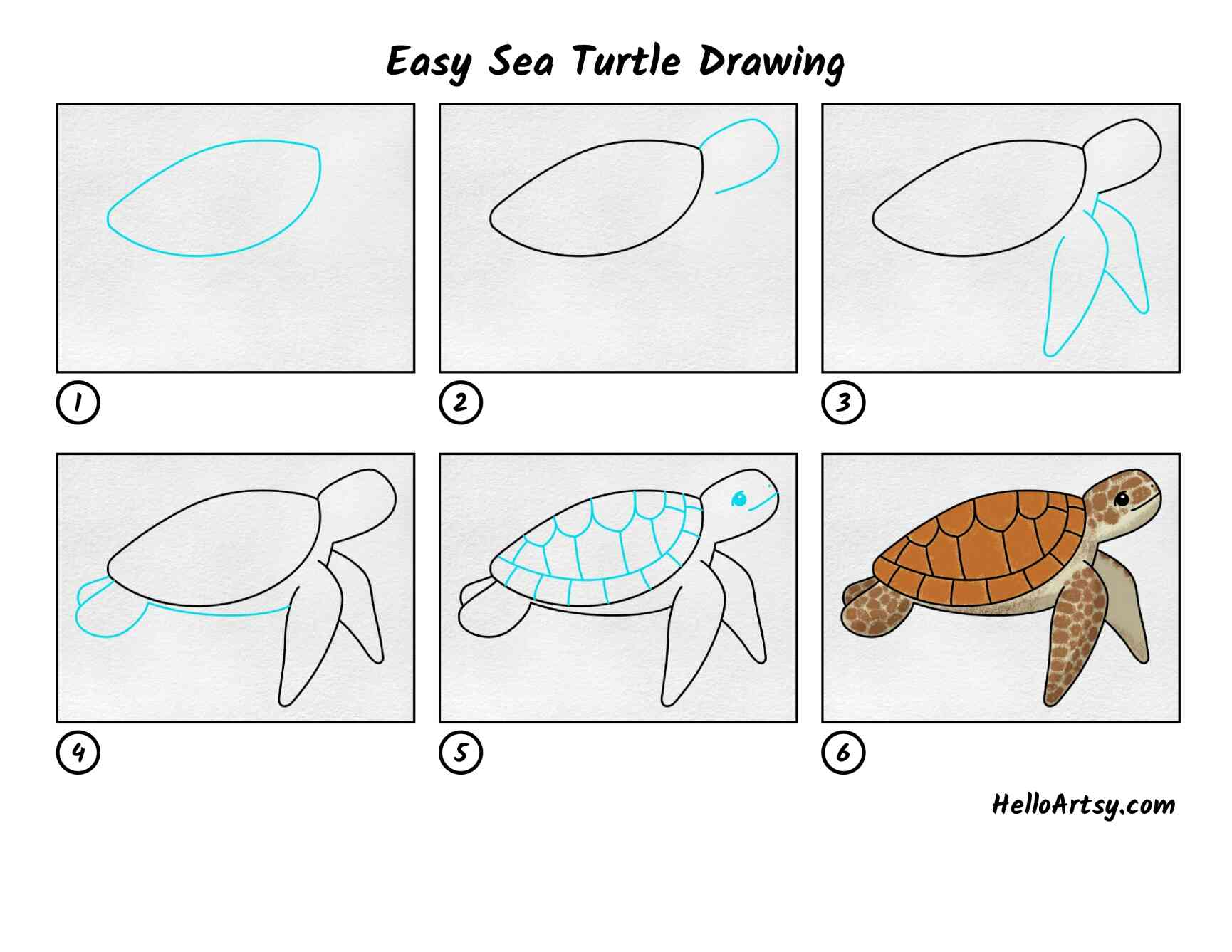 Sea Turtle Drawing Easy: All Steps