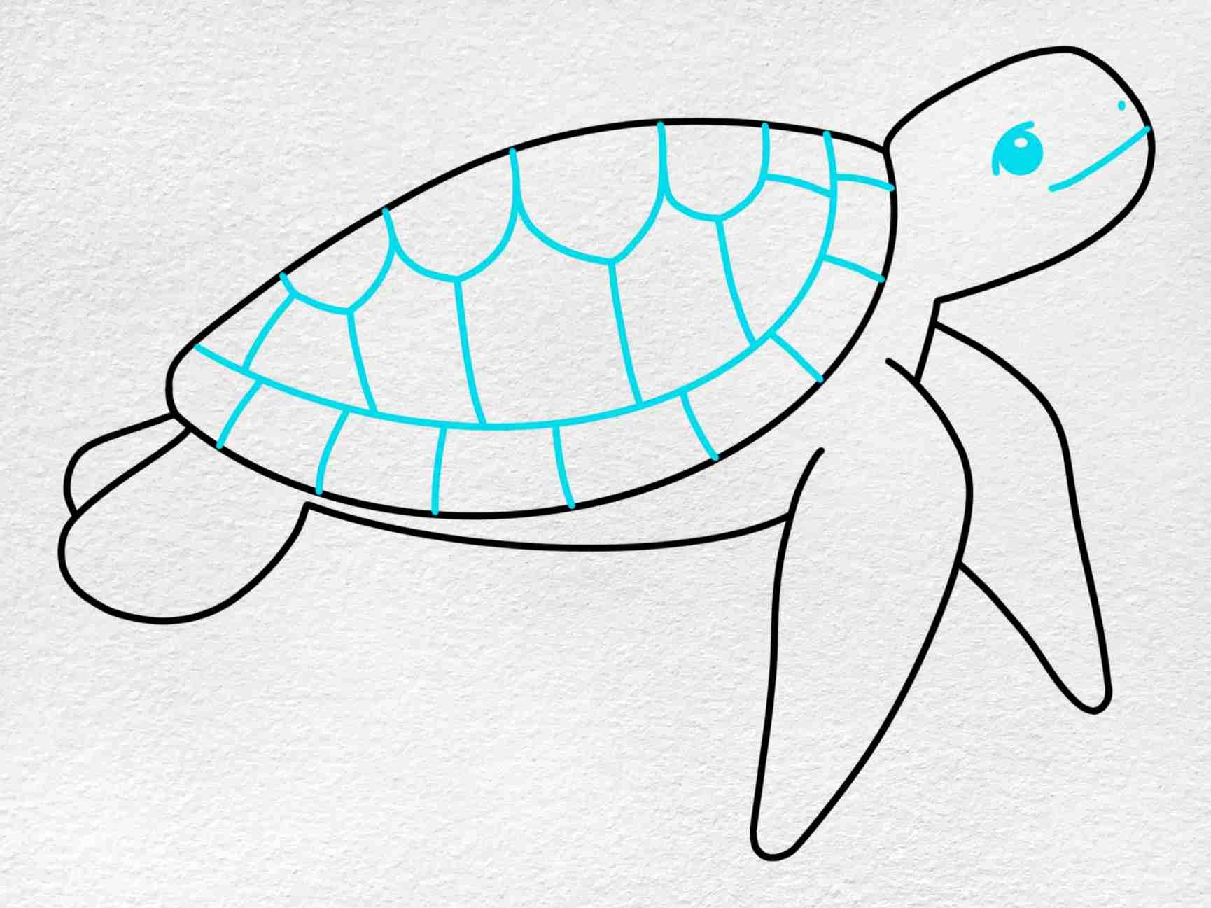 Sea Turtle Drawing Easy: Step 5
