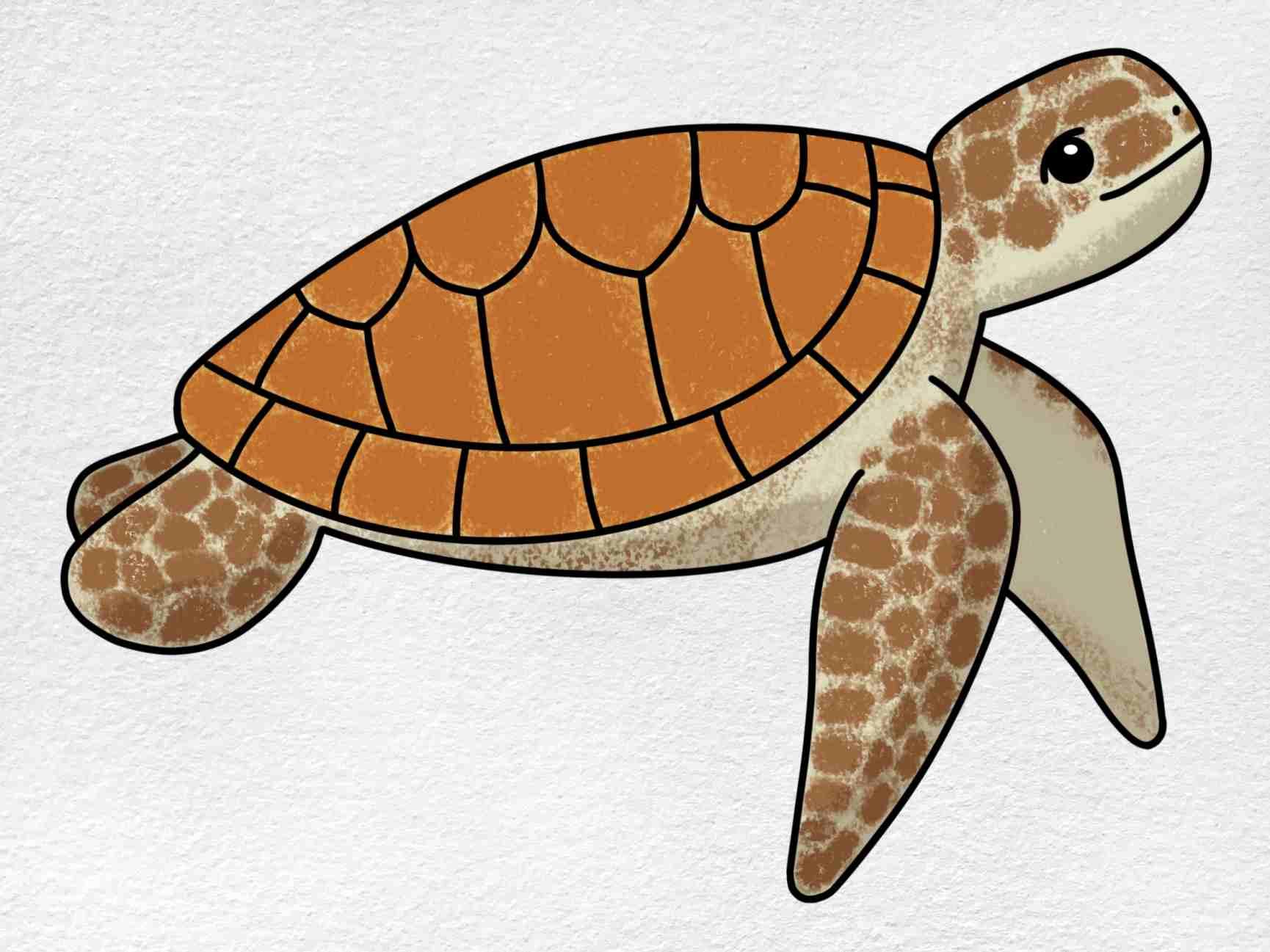 Sea Turtle Drawing Easy: Step 6