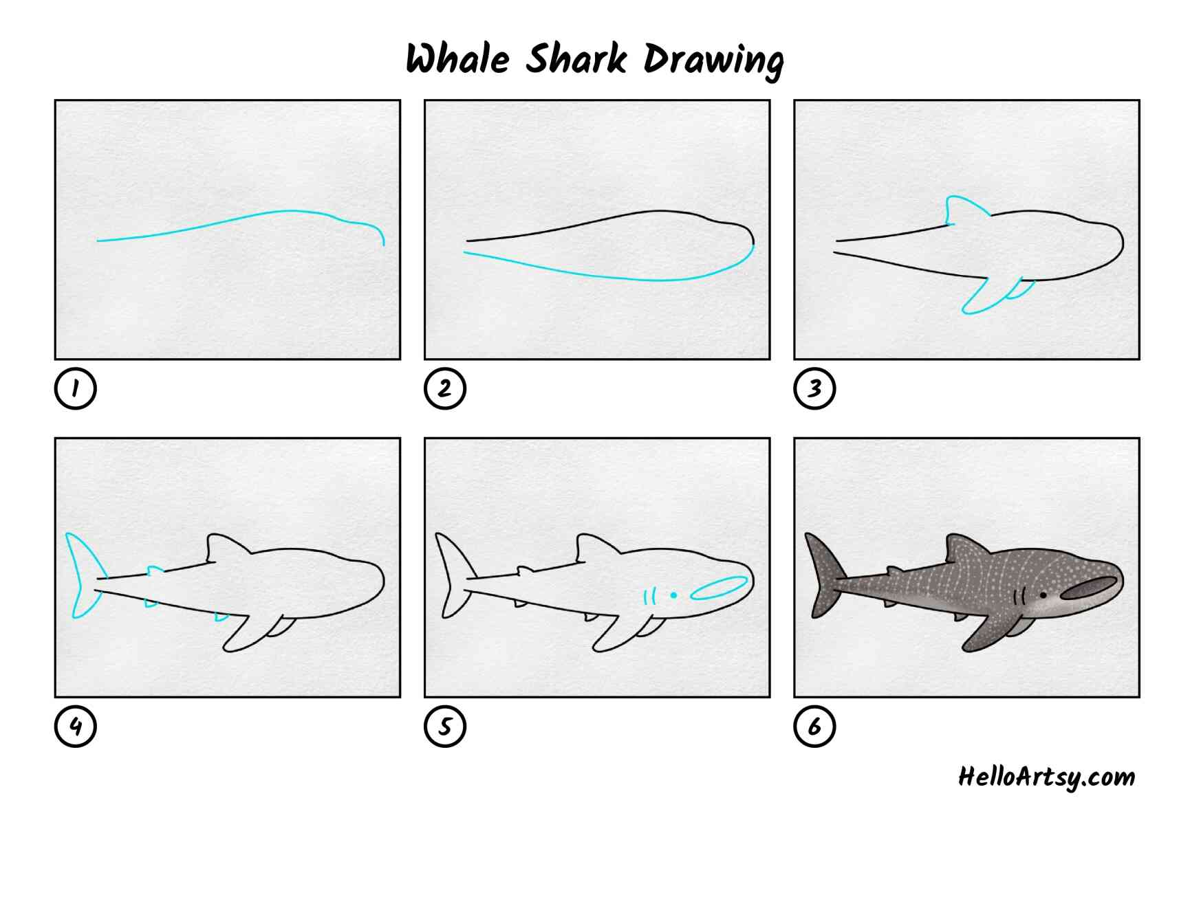 Whale Shark Drawing: All Steps
