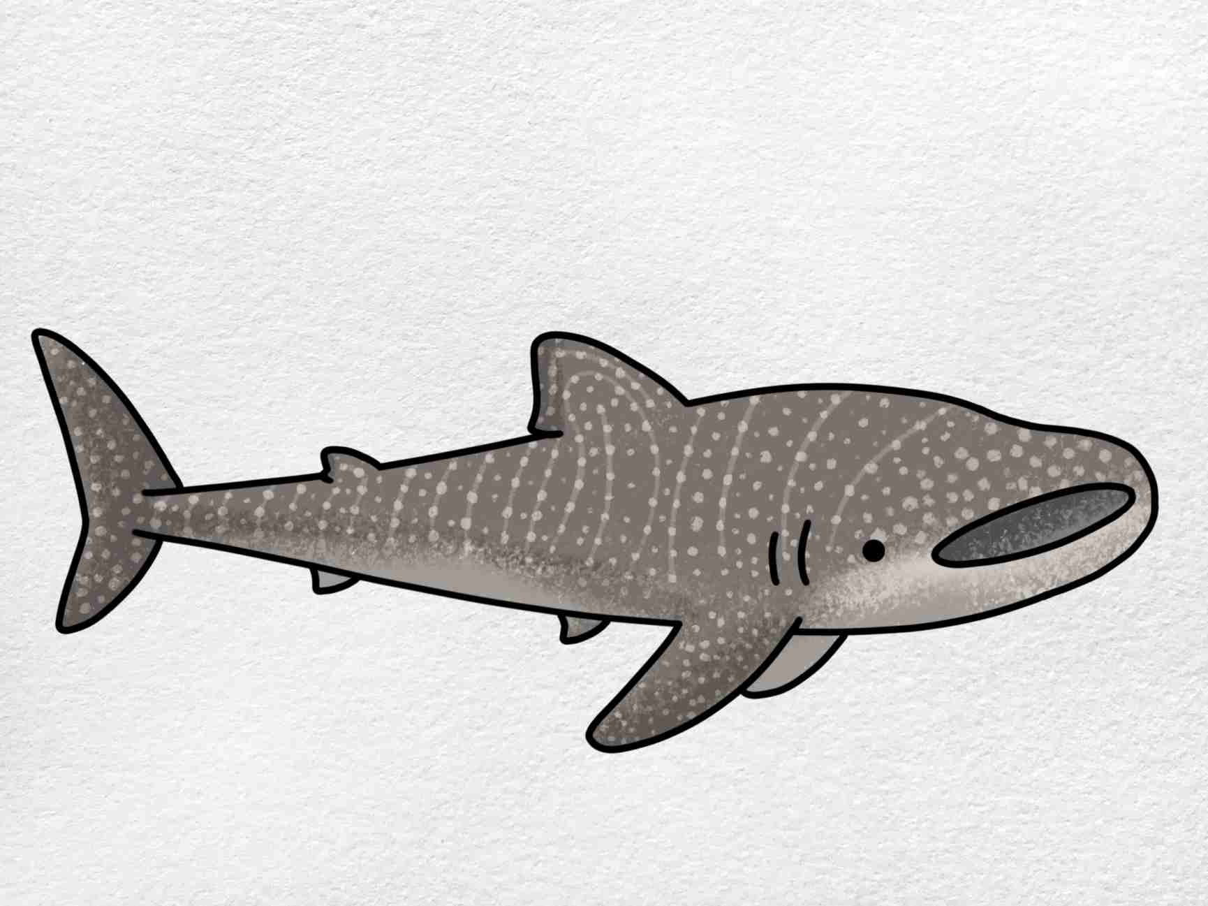 Whale Shark Drawing: Step 6
